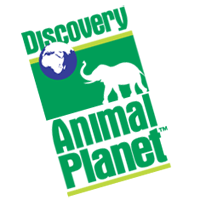 Discovery Animal P1 vector